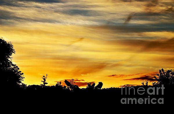 STRIPEY SUNSET SILHOUETTE -   Prints & Greeting Cards available at:  http://kaye-menner.artistwebsites.com/featured/stripey-sunset-silhouette-kaye-menner.html  -