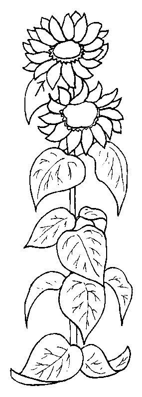 Coloriage Fleurs et plantes !                                                                                                                                                     More