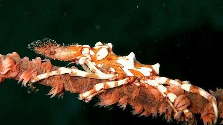 Beauty of underwater Bunaken National Marine Park