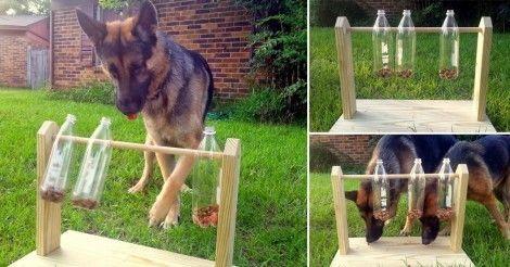Cómo+hacer+un+comedero-juguete+para+perros+con+botellas+de+plástico