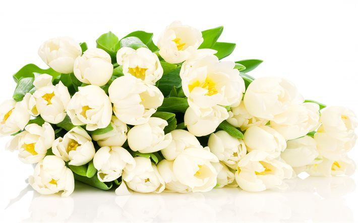 букет белых тюльпанов, белые цветы, белые тюльпаны, букет білих тюльпанів, білі квіти, білі тюльпани