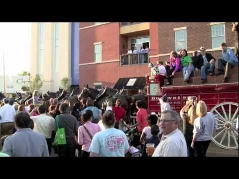 Budweiser Clydesdales Visit Batson Children's Hospital, Appear in 2012 Zippity Doo Dah Parade | http://newsocracy.tv