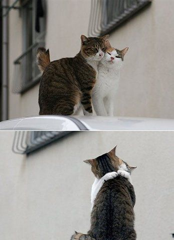kitties in love