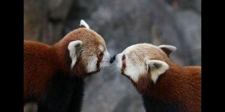 Un doux baiser