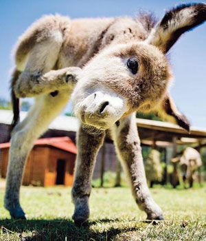 Sweetest pic ever of a donkey. Visit our page here: http://what-do-animals-eat.com/donkeys/