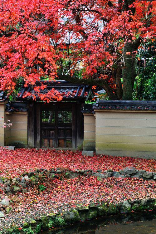 Autumn leaves outside Todai-Ji temple, Nara, Japan