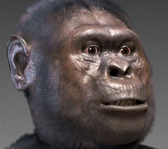 Forensic facial reconstruction of another Australopithecus species - A. afarensis. Image credit: Cicero Moraes / CC BY-SA 3.0.