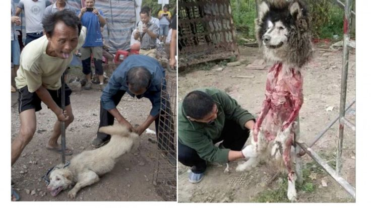 Horrific animal cruelty that shames China: Wild mob kill dogs just for WALKING into a city