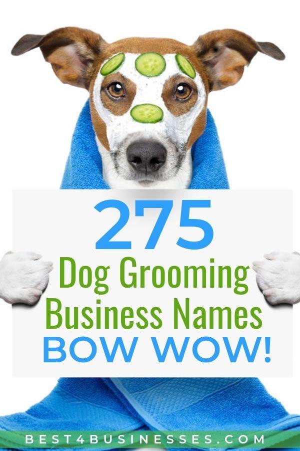 275 Creative Dog Grooming Business