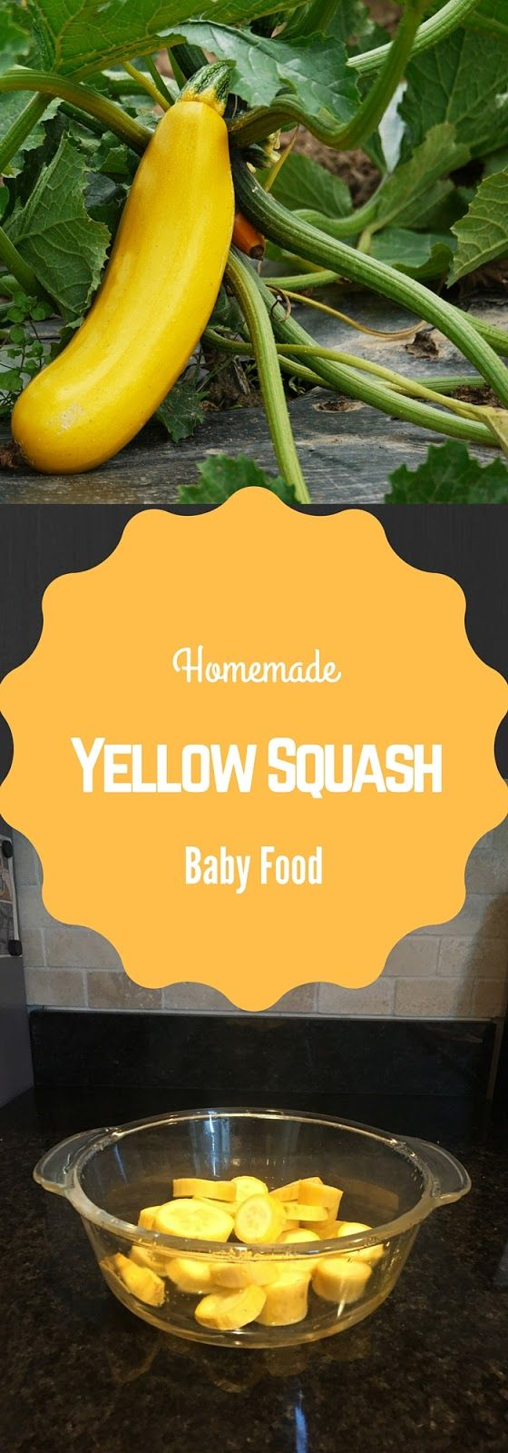 Homemade Yellow Squash Baby Food-- save money and make your own baby food! This…