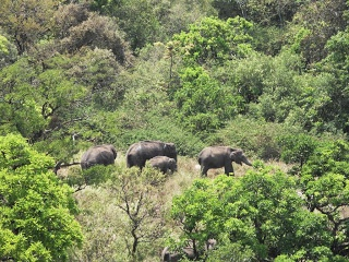 Embarking on Periyar National Park travel will simply delight you with mountain beauty and exotic wildlife. Take fun in various interesting activities like nature walk, boating and bird watching.