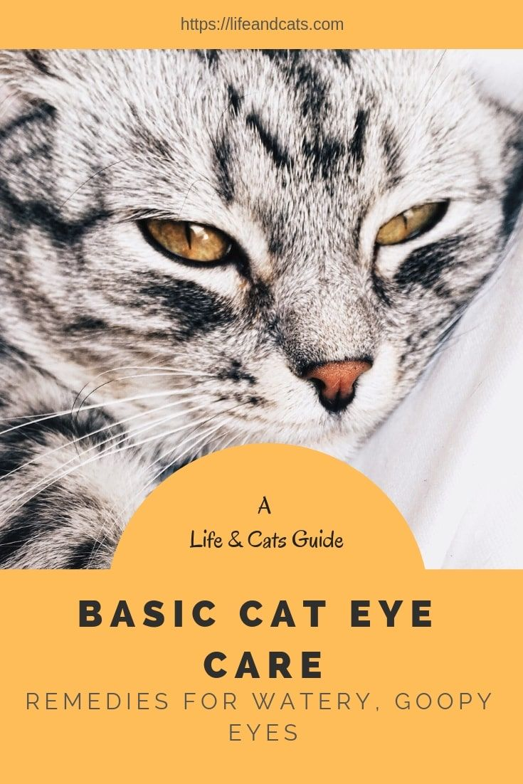 Keep Your Cat S Beautiful Eyes Clean And Healthy Life Cats Cat Eye Discharge Cat Eye Problems Cat Care