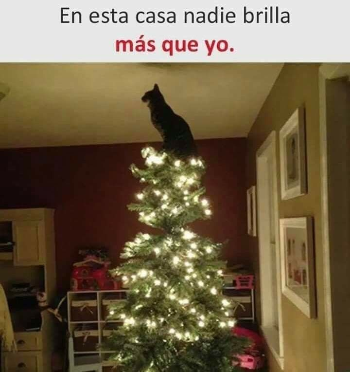Gato Navidad Meme Gato Gatitos Divertidos Gatos