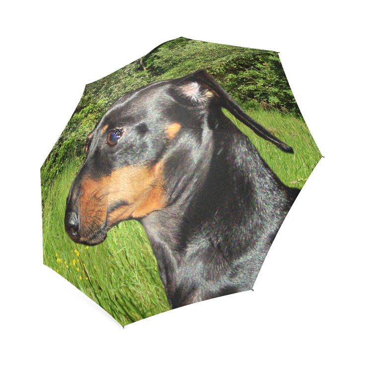 Dachshund Doxie Foldable Umbrella. FREE Shipping.  #erikakaisersot #artsadd #umbrellas #dogs