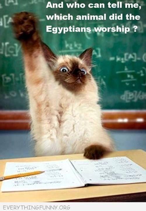 Cat worship ♥