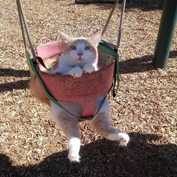 Cats Funny Pictures - 19 Pics