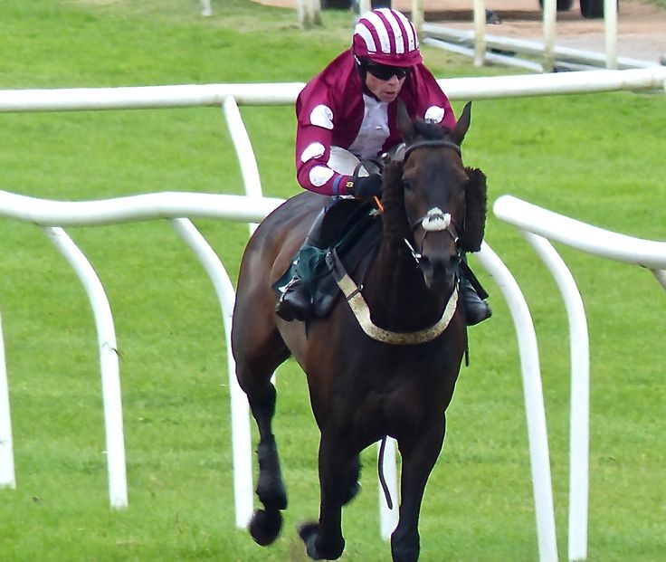 Sleeping City ridden by Denis O'Regan in final straight in the 2.40 race at 2015 Ladies Day at Uttoxeter Racecourse. http://www.uttoxeter-racecourse.co.uk
