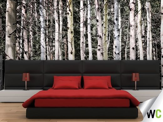 1000 images about at one with nature on pinterest for Aspen wall mural