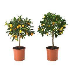 Planter, blomsterpotter og pidestaller - IKEA