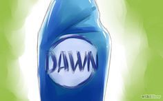 Kill Fleas With Dawn Dishsoap Step 1.jpg