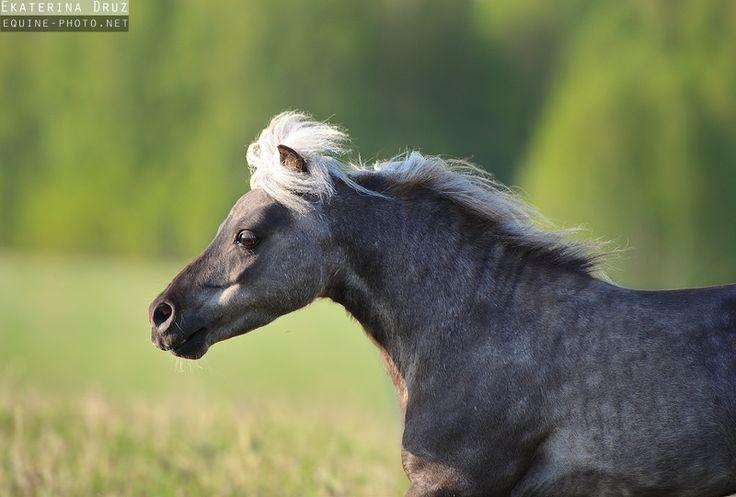 Summer 2012 - Equine Photography by Ekaterina Druz