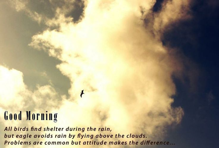 All birds find shelter during the rain   but eagle avoids rain by flying above the clouds   problems are common but attitude make the difference   Good morning