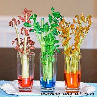Celery Activity Set Ups Pinterest Celery, Videos and