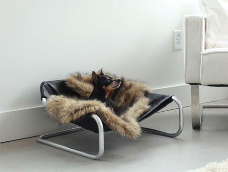 Extravagant pet furniture dog beds the o39jays and pet for Extravagant dog beds