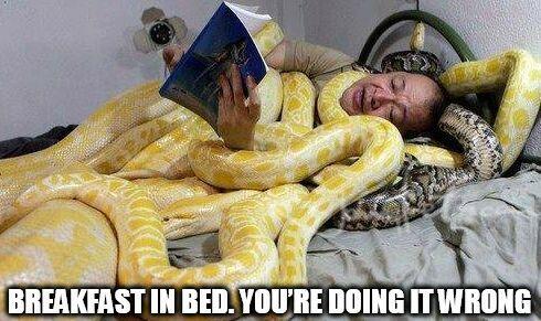 https://new.johnnybet.com/bongo-slots-casino-kampanjkod?fancy=1#picture?id=12493 #snake #memes #funny #choking #game #sleep