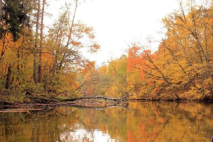 Nie jest rzadkością spotkanie na trasie spływu rzeką Krutynią orła bielika lub orła przedniego.  fot. Mrągowskie Centrum Informacji Turystycznej