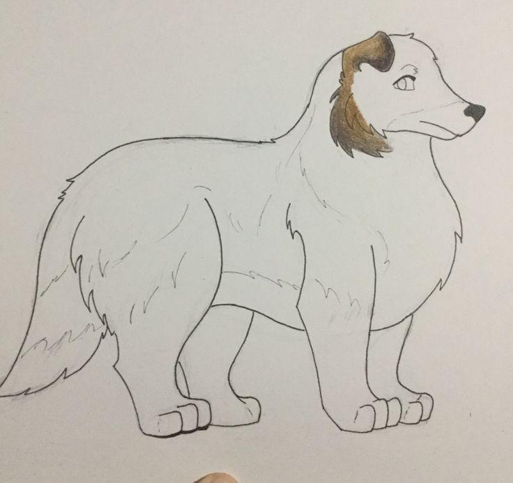 A WIP Sheltie/Shetland Sheepdog called Eduard