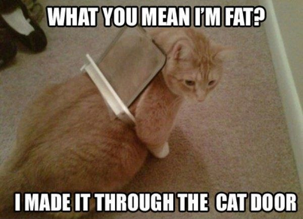 Fun Claw - Funny Cats, Funny Dogs, Funny Animals: Funny Pictures Of Cats - 18 Pics