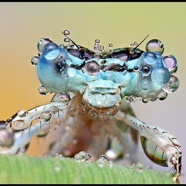 Best Macro Insects Images On Pinterest Macro Photography - Each of these macro bug photographs is made from thousands of individual images