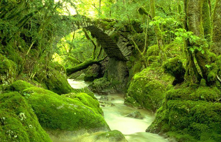 Cascade de la QuinquenouilleBelle cascade que l'on peut découvrir par un chemin balisé depuis Chatonnay