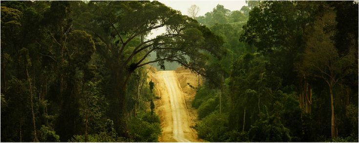 A legally questionable logging corridor built by Asia Pulp and Paper inside the traditional home of the Orang Rimba, one of Indonesia's last nomadic cultures. Jambi Province, Sumatra, Indonesia. Photo: David Gilbert/RAN