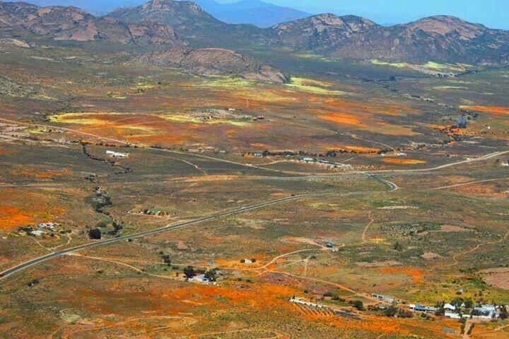 Sprinbok Namaqualand