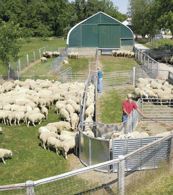 Handling Systems Hay Feeders Sheep Sheep Farm Sheep