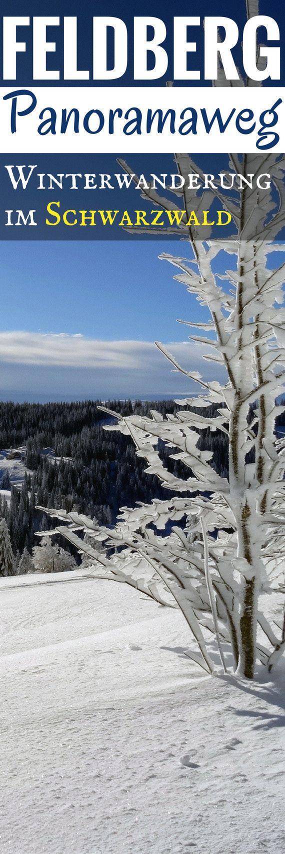Der Feldberg-Panoramaweg – Winterwanderung im Schwarzwald