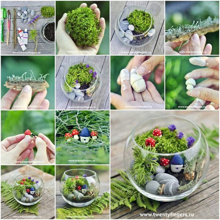 17 Best Images About Fish Bowl Gardens On Pinterest