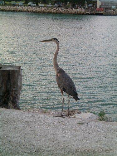Ahhhh! Venice, Florida's South Jetty P:ark!