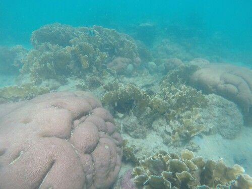#PlayaCristal #Coral #ParqueTayrona