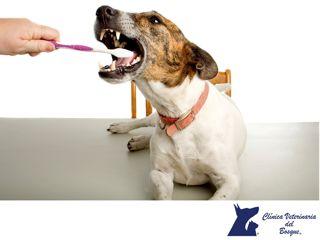 CLÍNICA VETERINARIA DEL BOSQUE. Nuestras mascotas como nosotros, sufren de problemas dentales tales como lesiones que afectan los tejidos vivos en el interior del diente.  Cuando está afectada la pulpa dental se realiza un Tratamiento de Conducto denominado Endodoncia. En Clínica Veterinaria del Bosque contamos con médicos veterinarios especialistas para proteger la salud bucal de tu mascota.  #cuidadodemascotas