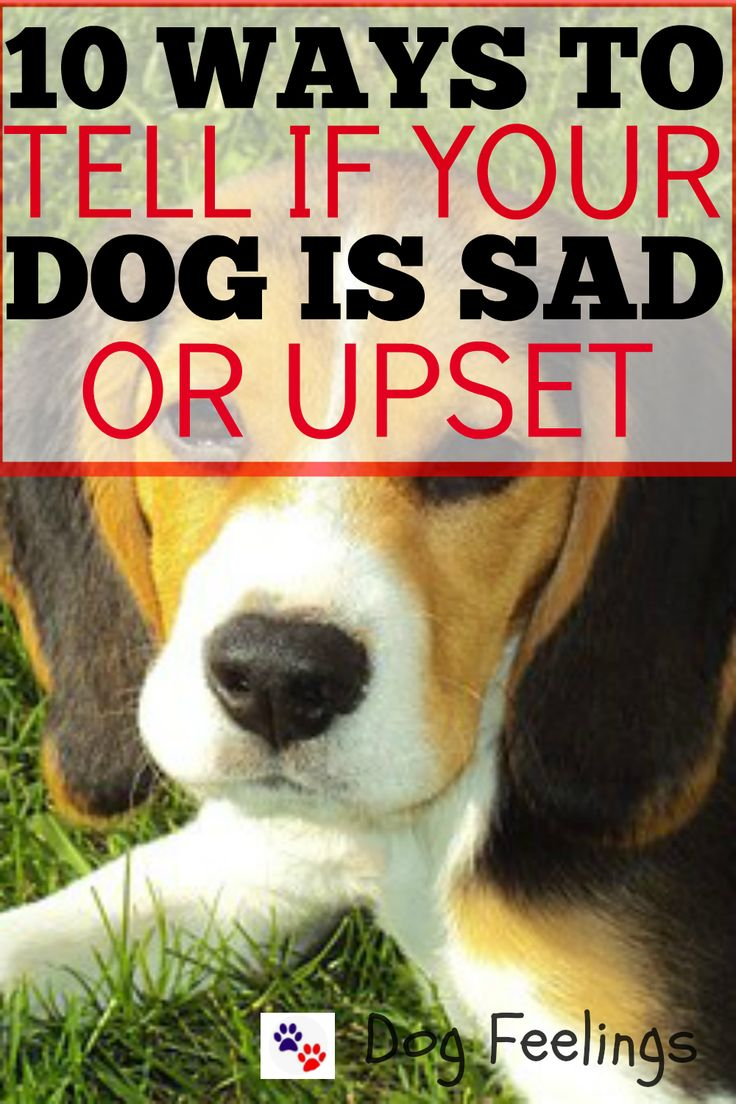10 Ways To Tell If Your Dog Is Sad Or Upset   https://dogfeelings.com/how-to-tell-if-your-dog-is-sad/