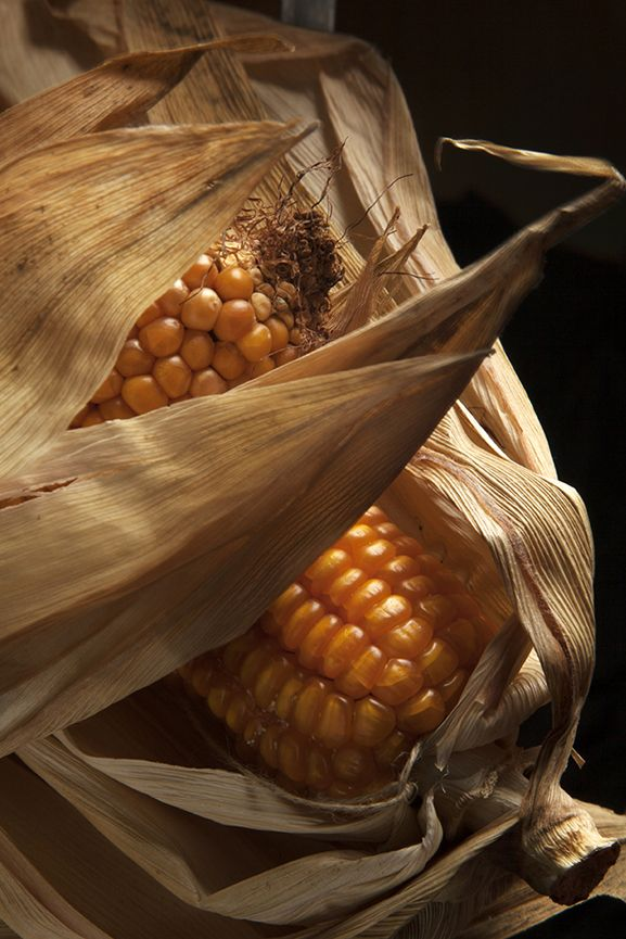 Pannocchia - Corn on the cobs