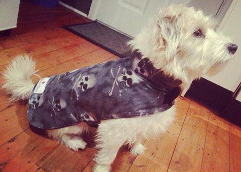 terrier coat