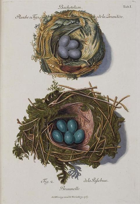 Collection of nests of different birds: 'Sammlung von Nestern und Eyern verschiedener Vögel..' by FC Günther and AL Wirsing, published between 1772 and 1786