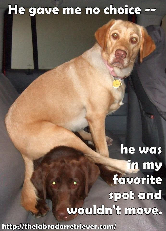 This reminds me of my dogs. They are BOTH Lab mixes.
