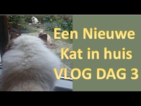 KATTEN   Een nieuwe kat erbij vlog dag 3