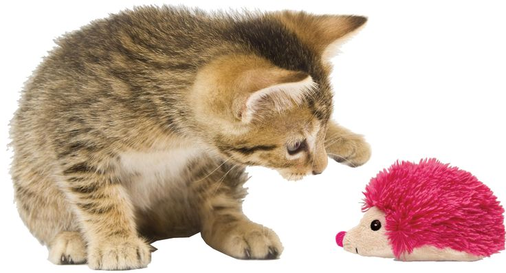 Bright Refillables bieden de huiskat een nieuwe manier van spelen. In de verborgen compartimenten kunt u steeds opnieuw vers kattenkruid stoppen, zodat spelen met dit speeltje iedere keer weer nieuw is. De extra lange, zachte pluchen stof maakt dit speelgoed aantrekkelijk en comfortabel en zorgt er tegelijkertijd voor dat katten hun instinctieve energie kwijt kunnen met achtervolgen en vangen. Ieder speeltje wordt geleverd met een verpakking KONG Premium Noord-Amerikaans kattenkruid.