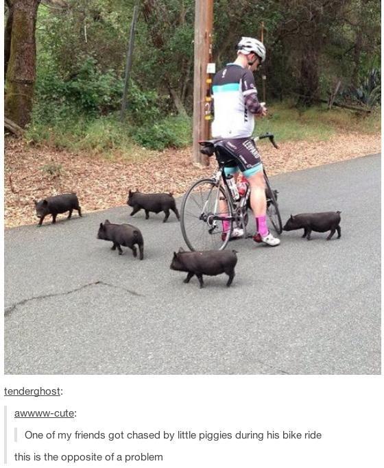 Aww little piglets!!